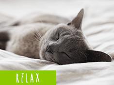 ぐっすり睡眠をサポート!おやすみ前のリラックスアイテム