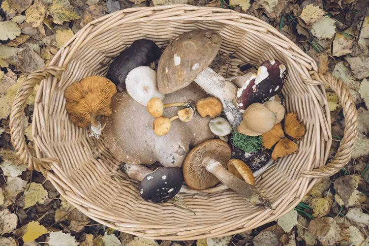 秋の食材は食物繊維が豊富